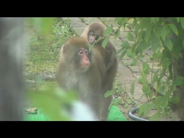 monkey05