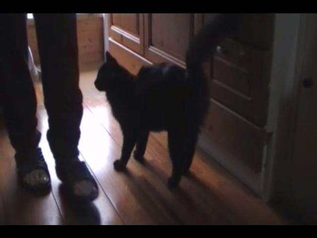 黒猫クマ子のオハヨー   Black cat Kumako speaks Ohayoo (good morning)