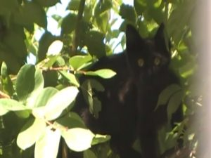 黒猫クマ子・木の上01