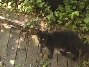 黒猫クマ子・木の上02