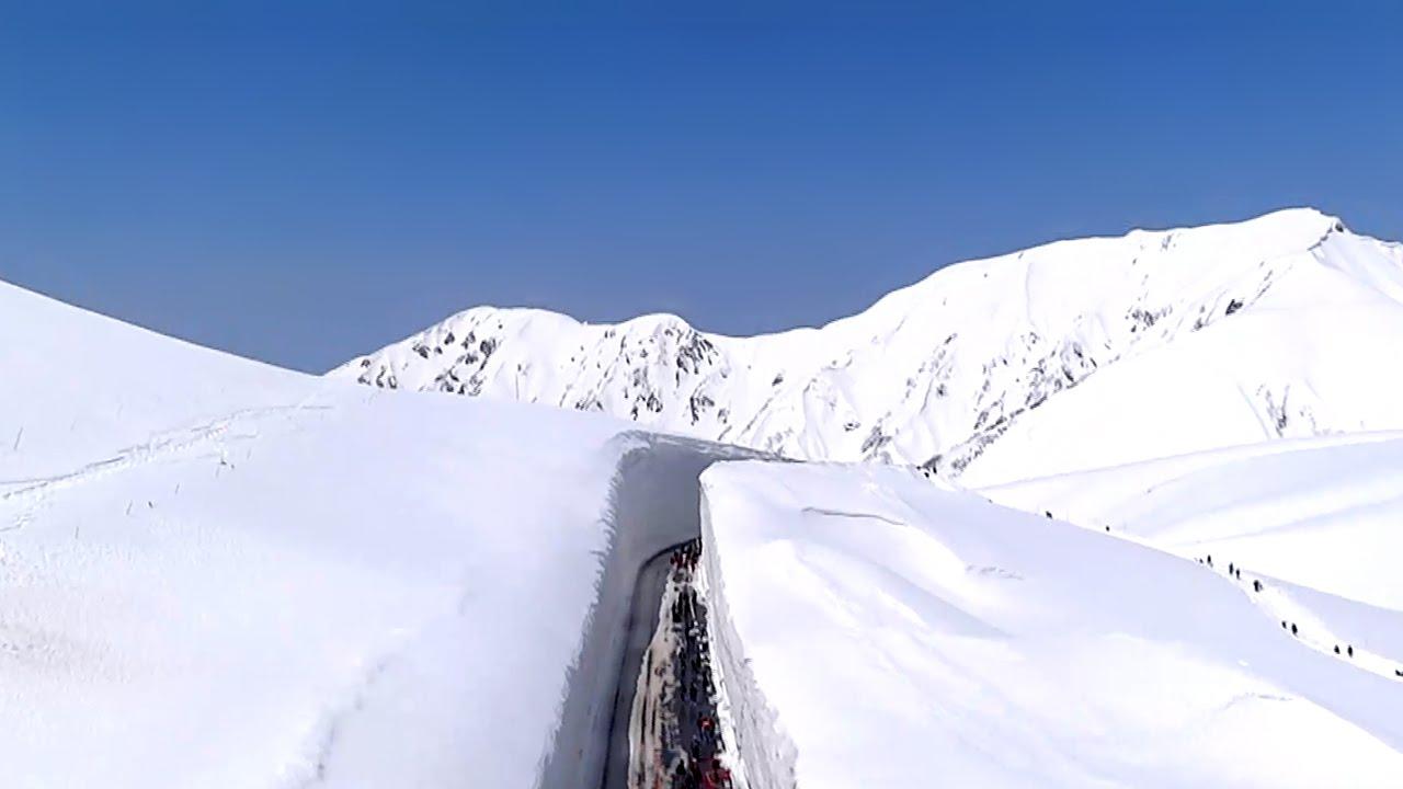 【編集長麦ちゃん】第25回 立山・雪の大谷ウォークが4月に開催!!いよいよ春でつ♪♪