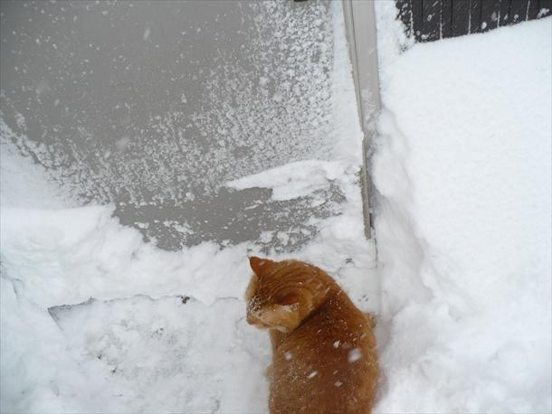 【編集長麦ちゃん】それにしても寒いでふねええ、、。(¯―¯٥)くすん