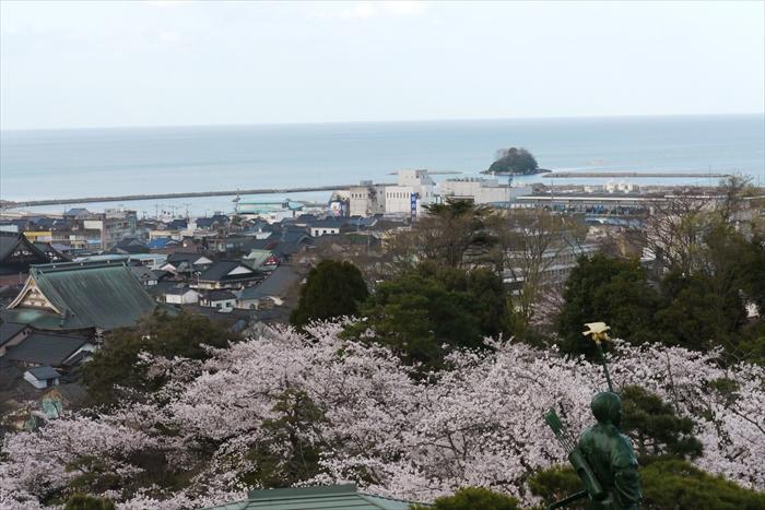 桜と富山湾ごしの立山連峰~4月8日一般公開♪
